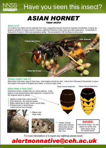 Asian Hornet ID poster. Source: INNS