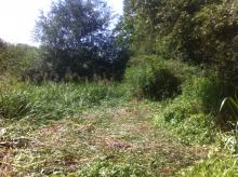 After... cleared stand of Himalayan balsam allowing native plants to recover