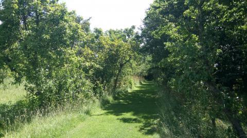Orchard at Abbotts Hall Farm. Photo: Essex Wildlife Trust