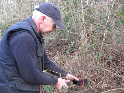 Dormouse tube checking. Photo: Essex Wildlife Trust