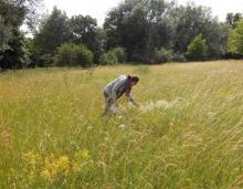 Grassland surveying